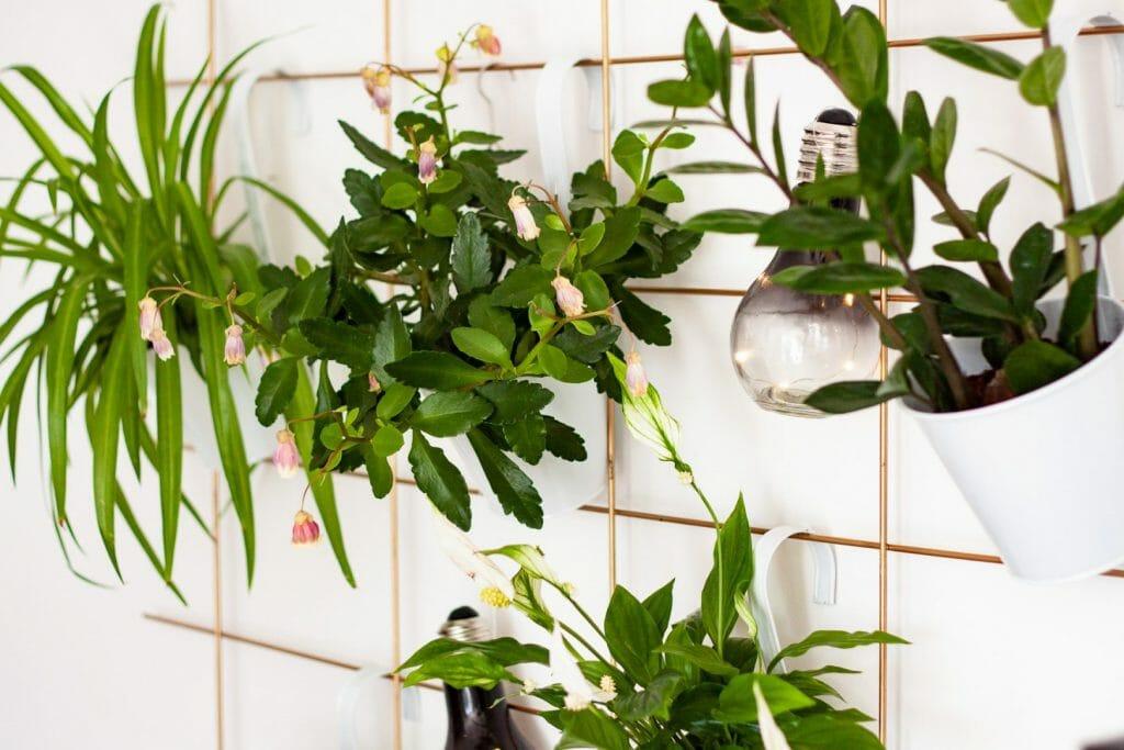 DIY Pflanzenwand – Plant Wall